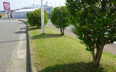 ゆめタウン筑紫野緑地帯手入れ工事1